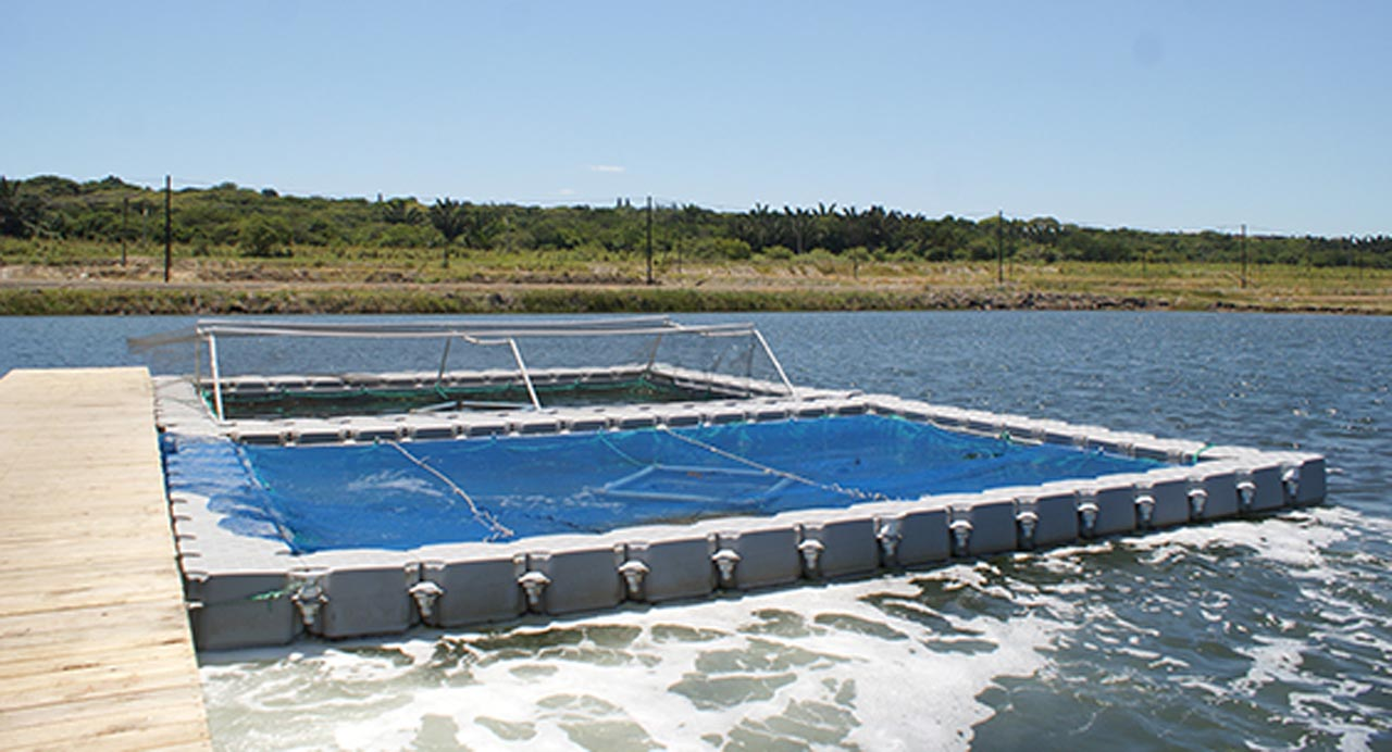 Aquaculture uses for the dockpro 3