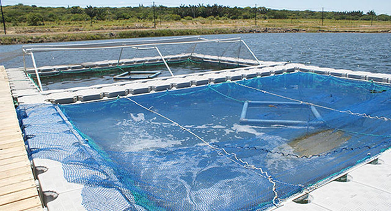 Aquaculture uses for the dockpro 4
